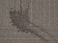 Reoccurring Carpet Stains